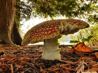 обои Большой гриб под деревом фото