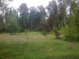 обои Лужайка где то в лесу фото