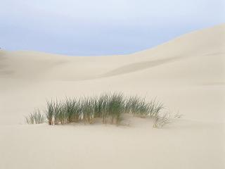 обои Островок зелени посреди пустыни фото