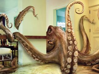 обои Огромный осминог в квартире фото