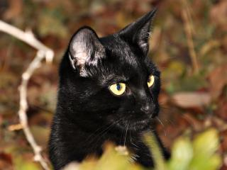 природа животные кот котенок черный  № 654354 без смс