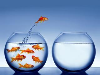 обои Хитрая рыбка фото