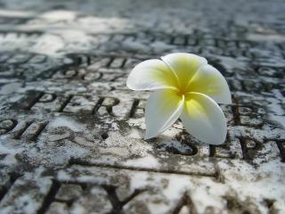 обои Одинокий цветок фото
