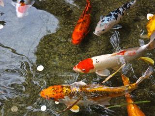 обои Плаваб цветные рыбки фото