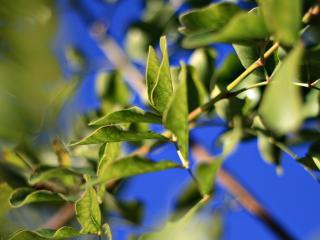 обои Зеленые листья и синее небо фото