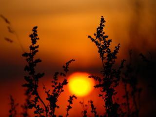 обои Солнечный закат и трава фото