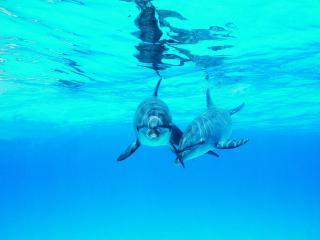обои Он и Она под водой фото