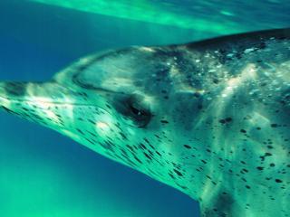 обои Печальный дельфин фото