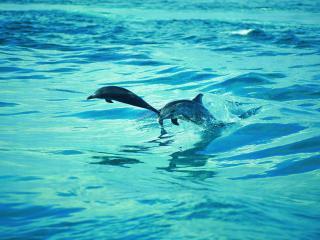 обои Морская жизнь фото