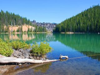 обои Летом коряга в озере фото