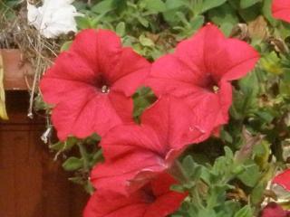 обои Цветы (база отдыха Приморье) фото
