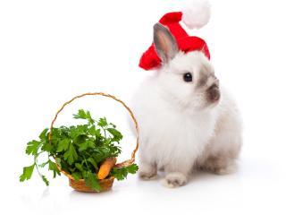 обои Новогодний кролик - символ 2011 года фото