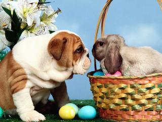 обои Пасхальный кролик и пес фото