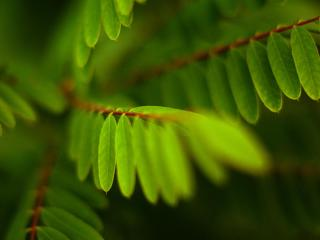обои Листья папоратника фото
