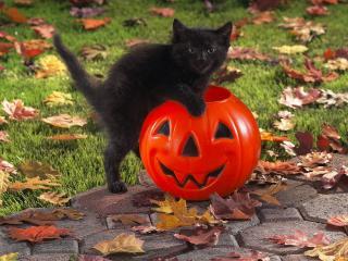 обои Черный котенок с тыквой фото