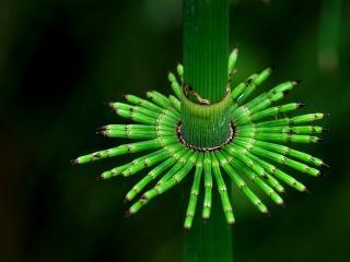 обои Зеленые трубочки и стебелек фото