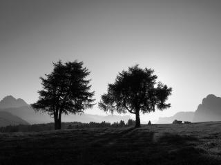 обои Два летних дерева, мрачный пейзаж фото