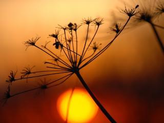 обои Закат солнца и растения фото