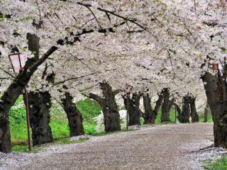 обои Парк Хиросаки в Японии фото
