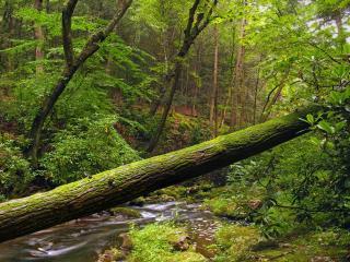 обои Ручей весной, у поваленного дерева фото