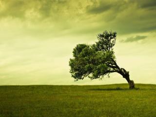 обои Одинокое дерево посреди поля фото