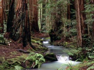 обои Ручей посреди летнего леса фото