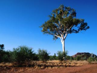 обои Одинокое дерево летом, на песке, на фоне голубого неба фото