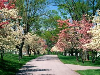 обои Разноцветные кроны деревьев фото
