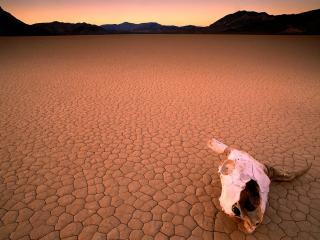обои Череп в пустыне фото