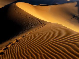обои Следы человека на песке фото
