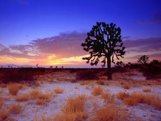 обои Одинокое дерево в пустыне фото