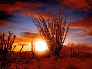 обои Восход солнца в пустыне фото