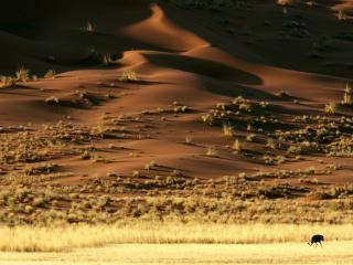 обои Пучки травы и птица в пустыне фото