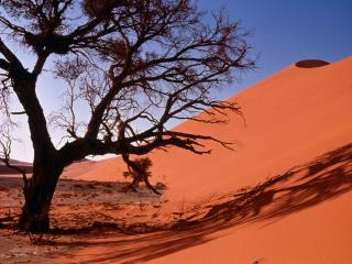обои Дерево в пустынной местности фото