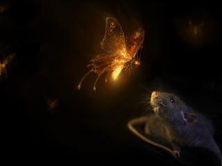 обои Бабочка и мышь фото