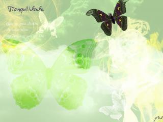 обои Бабочка фото
