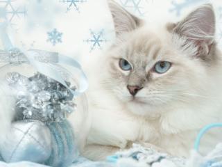 обои Кот и новогодняя игрушка фото