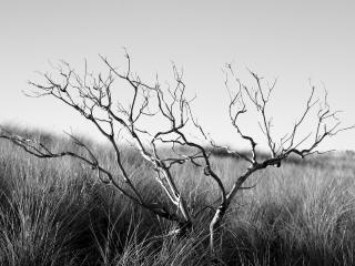 обои Сухой кустарник в пустыне фото