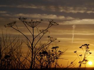 обои Осенний закат где-то в степи фото