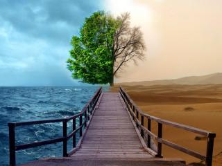 обои Море и пустыня фото