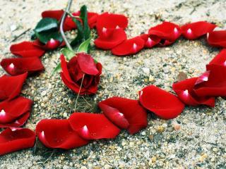 обои Сердце выложенное лепестками красной розы фото