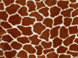 обои Темная шкура жирафа фото
