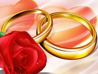обои Роза и обручальные кольца фото