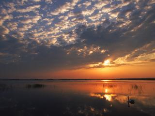 обои Закат озеро лебедь фото