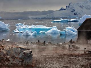 обои Пингвины на теплых камнях фото