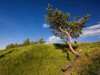 обои Одинокое дерево фото