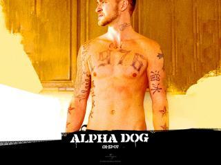 обои Фильм Alpha dog фото