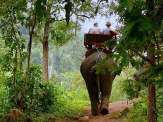обои Прогулка верхом на слоне по джунглям фото