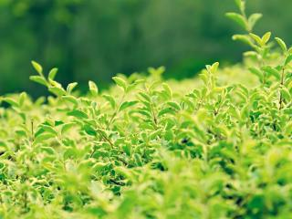 обои Огромный зелёный лес фото