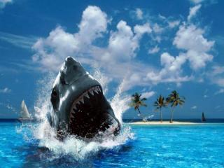 обои Акула на пляже фото